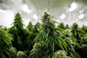 Dans quelle pharmacie acheter des produits a l'huile de cbd au cannabis en France ?